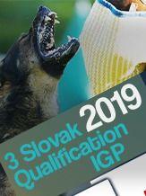 2019 3 kvalifikačný pretek o postup na MS FCI a WUSV  Detva - Látky - IGP 3