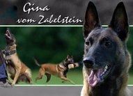 Gina vom Zabelstein