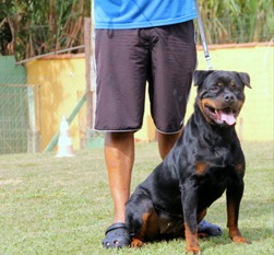 Djayra Elito Black Champion