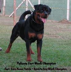 Valente Fart Black Champion