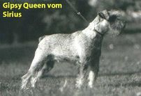 Gipsy Queen vom Sirius