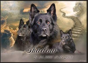 Shadow vom Bühlerstein