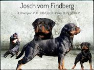 Josch vom Findberg