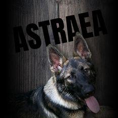 Astraea z Pracovni Bohemia