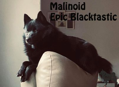 Malinoid Epic Blacktastic
