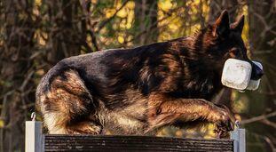 Arash-Pike de la Casa del Perro