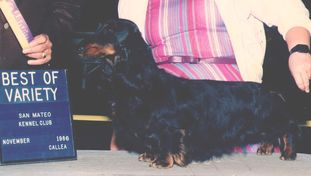 Lostdog's Black Bart