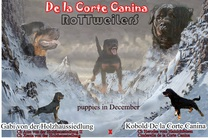 Kobold De la Corte Canina & Gabi von der Holzhaussiedlung