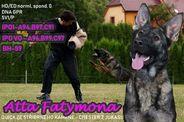 Atta Fatymona