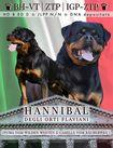 Hannibal degli orti Flaviani