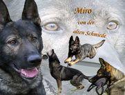 2019 Zucht: Emy vom Großen Ex & Miro von der alten Schmiede