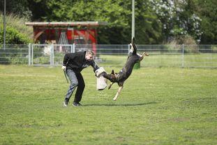 Bushido von Hund und Sport