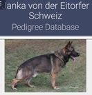 Janka von der Eitorfer Schweiz