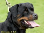 Olympia Kovi-rot