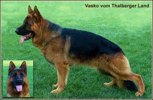 Vasko vom Thalberger Land