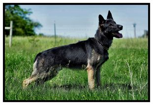 Ilyushin European K9 training base