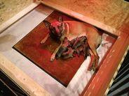 4 days old malinois puppies