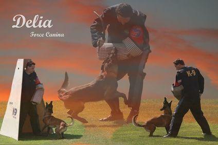 Delia Force Canina