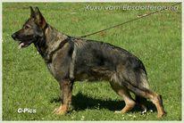 Xuxu vom Ebsdorfergrund