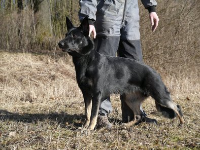 Scarlett Kateko