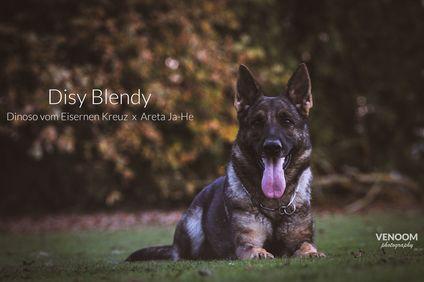 Disy Blendy