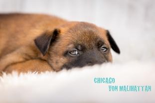 Chicago von Malihattan