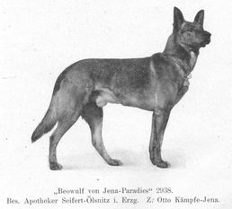 Beowulf von Jena-Paradies