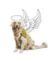 Helppes Centrum výcviku psů pro postižené o.p.s.