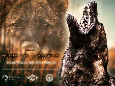 Ansgar vom Wolfsschrein