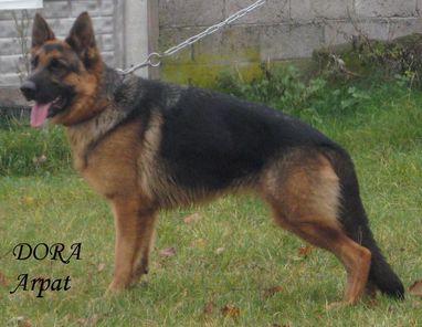 Dora Arpat