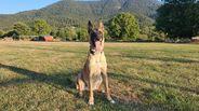 Egoldy vom Giannioti Sports Dog