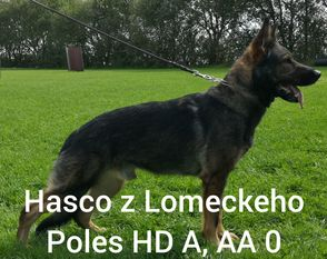 Hasco z Lomeckeho Polesi