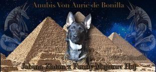 Anubis von Auric de Bonilla