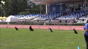 Vallhunden Chapman