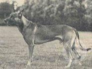 Broer van Rex ( v.d. Broek)