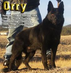 Orry (CMKU 46238/02)
