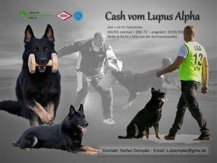 Cash vom Lupus Alpha