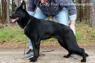 Cody vom haus Valkenplatz