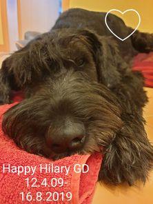 Happy Hilary Goldest Danubius
