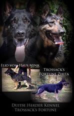 Trossack's Fortune Zhita