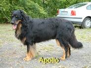 Apollo vom Rehwinkel
