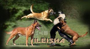 Belgian Tigers Ileisha