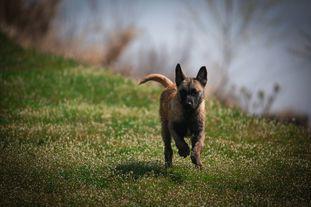 Fox of Survivalschool Kennel