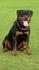 Inez Gero-Dogs