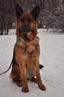 Faerhund Zarnica