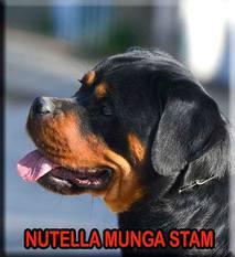 Nutella Munga Stam