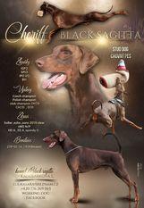 Cheriff Black Sagitta