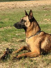 Hazel vom Böxenwolf