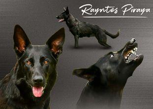 Rayntes Piraya