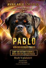 Pablo von der Bleichstrasse
